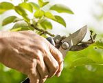 SeasonSpecials_pruning