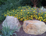 Rocks-Yellow-Flowers-150-x-120