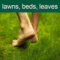 Lawns, beds and leaves